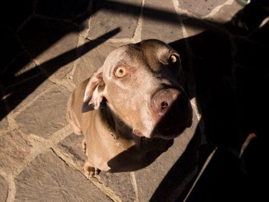shadow-dog